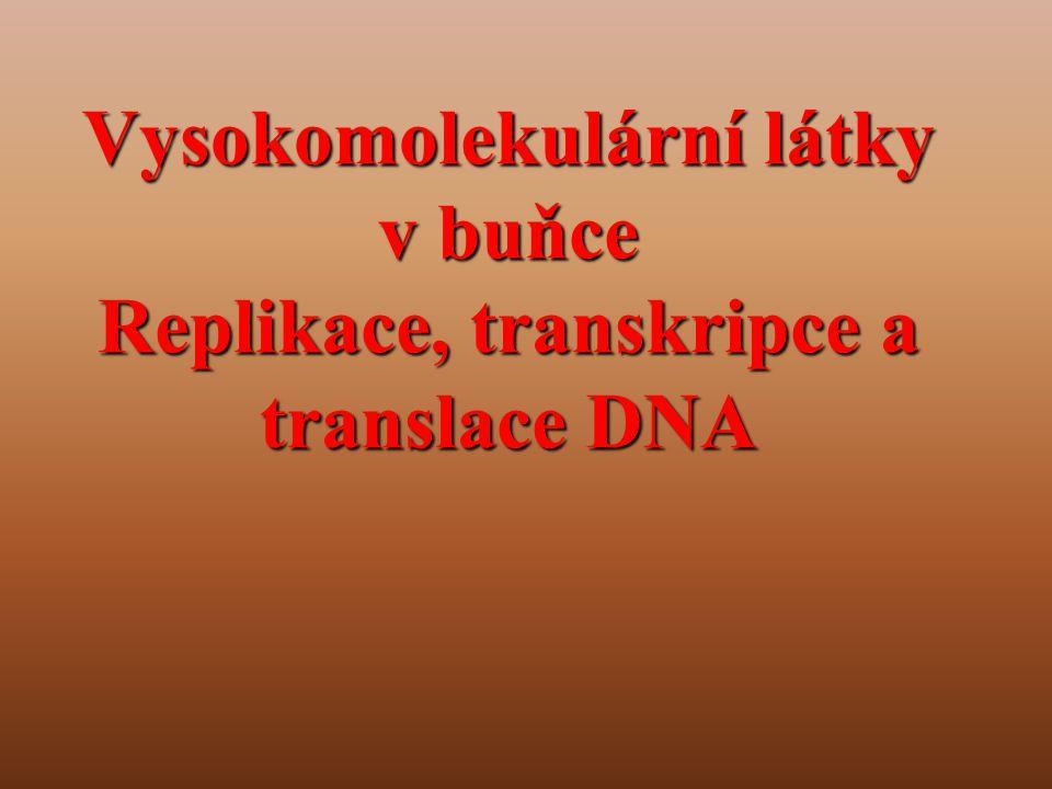 Vysokomolekulární látky v buňce Replikace, transkripce a translace DNA