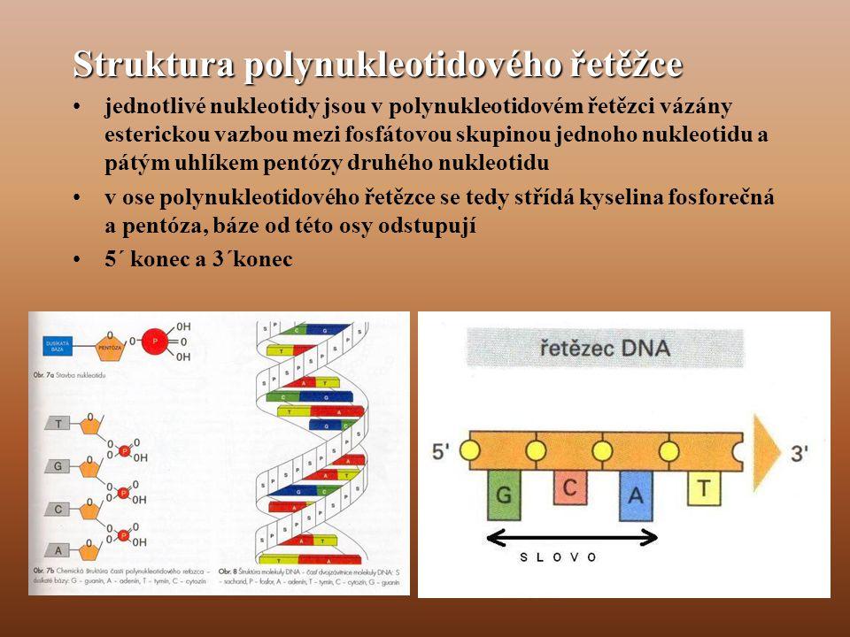 Struktura polynukleotidového řetěžce