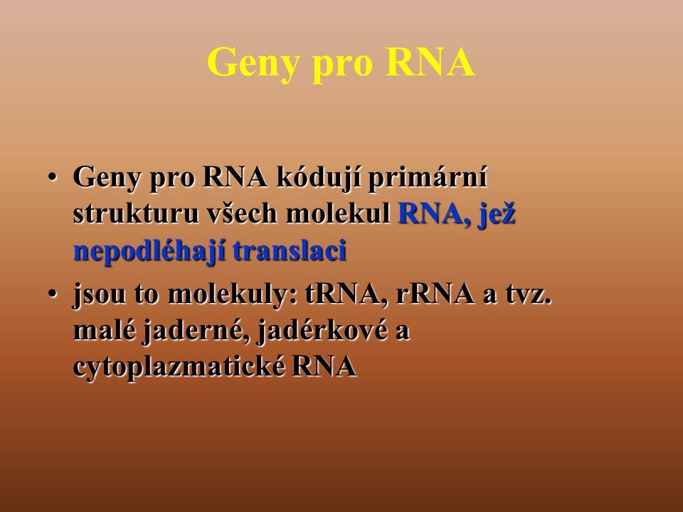 Geny pro RNA Geny pro RNA kódují primární strukturu všech molekul RNA, jež nepodléhají translaci.