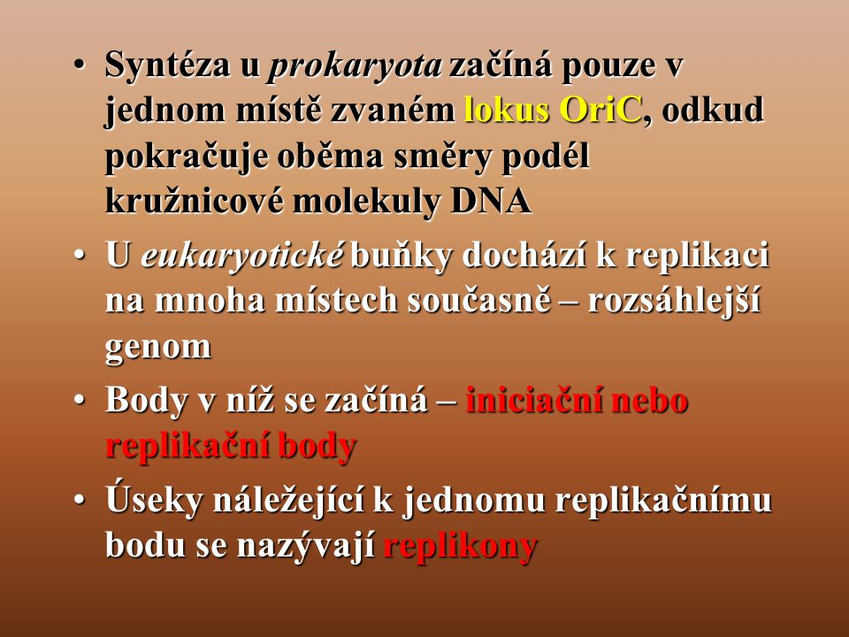 Syntéza u prokaryota začíná pouze v jednom místě zvaném lokus OriC, odkud pokračuje oběma směry podél kružnicové molekuly DNA