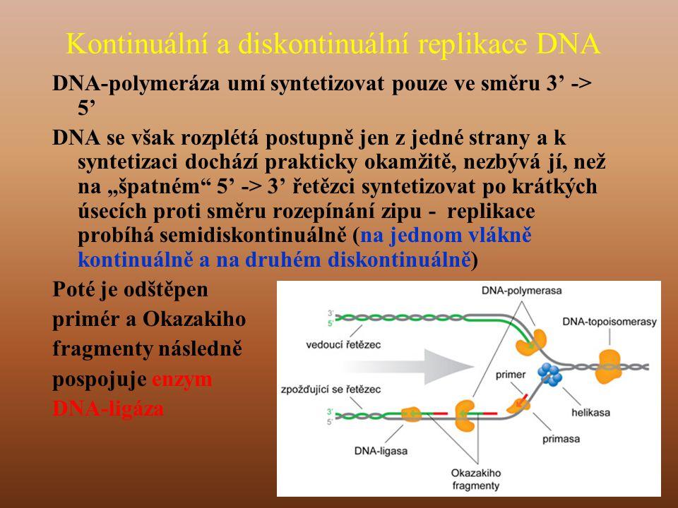 Kontinuální a diskontinuální replikace DNA