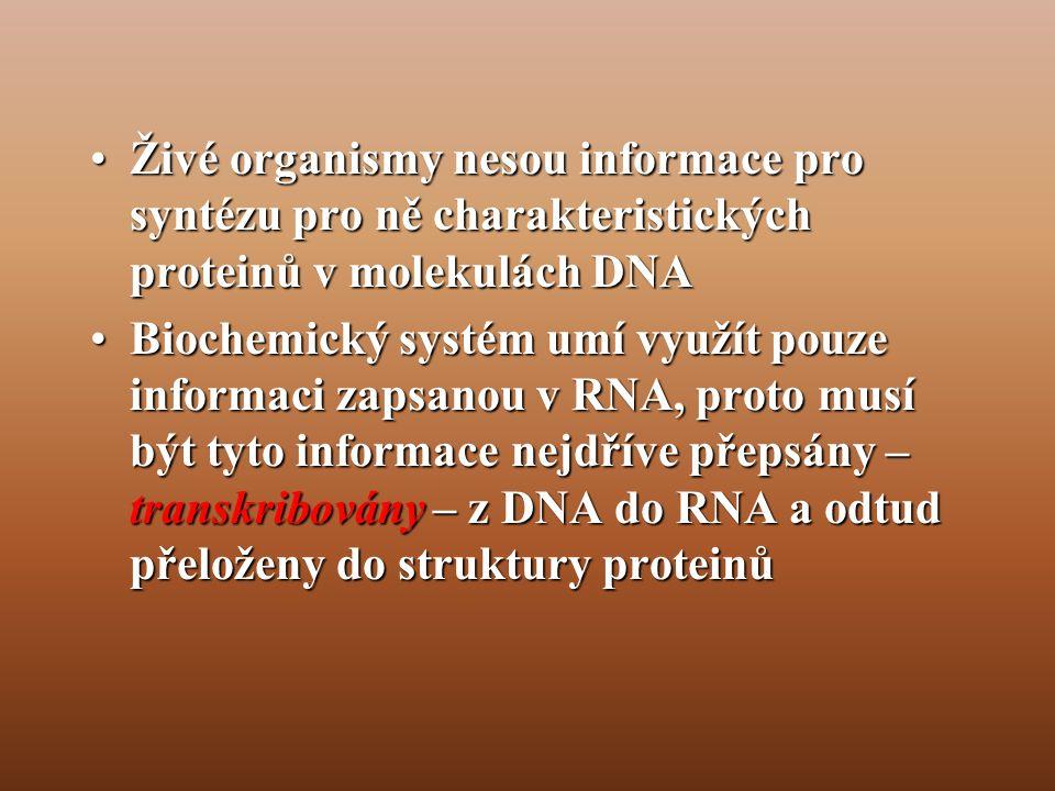 Živé organismy nesou informace pro syntézu pro ně charakteristických proteinů v molekulách DNA