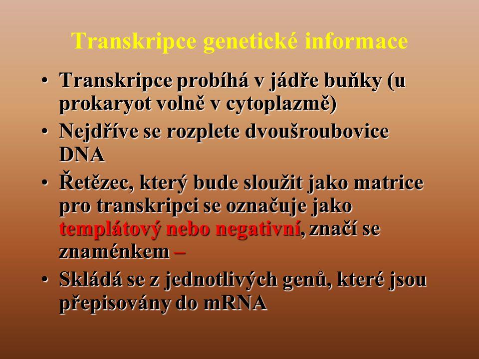 Transkripce genetické informace
