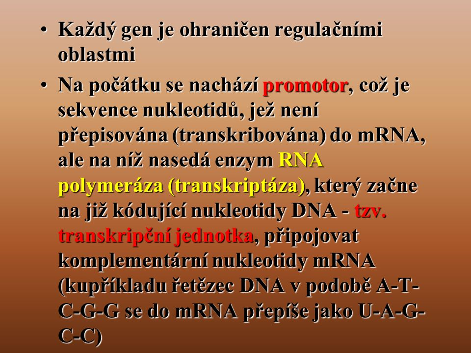 Každý gen je ohraničen regulačními oblastmi
