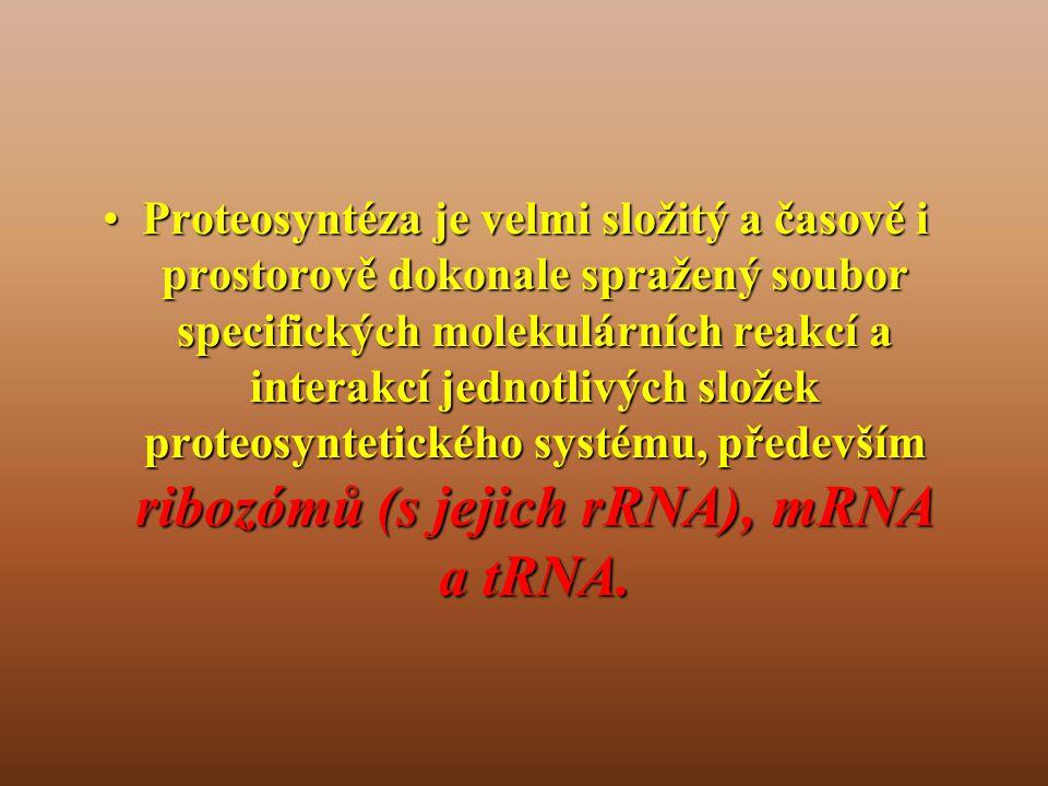 Proteosyntéza je velmi složitý a časově i prostorově dokonale spražený soubor specifických molekulárních reakcí a interakcí jednotlivých složek proteosyntetického systému, především ribozómů (s jejich rRNA), mRNA a tRNA.