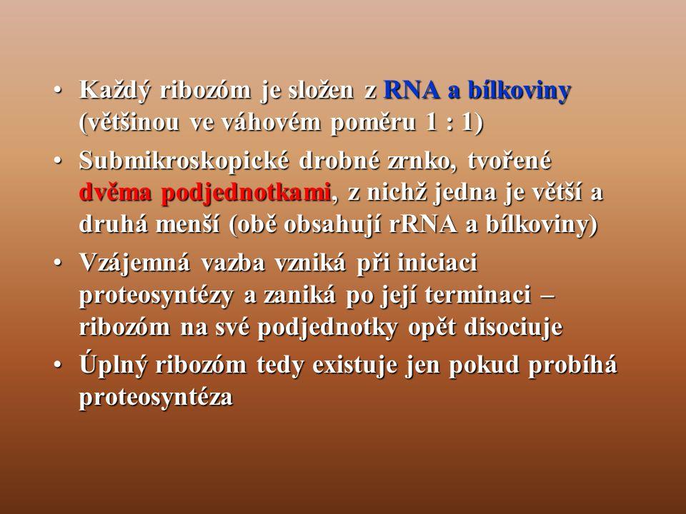 Každý ribozóm je složen z RNA a bílkoviny (většinou ve váhovém poměru 1 : 1)