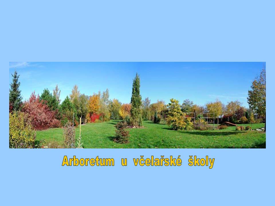 Arboretum u včelařské školy