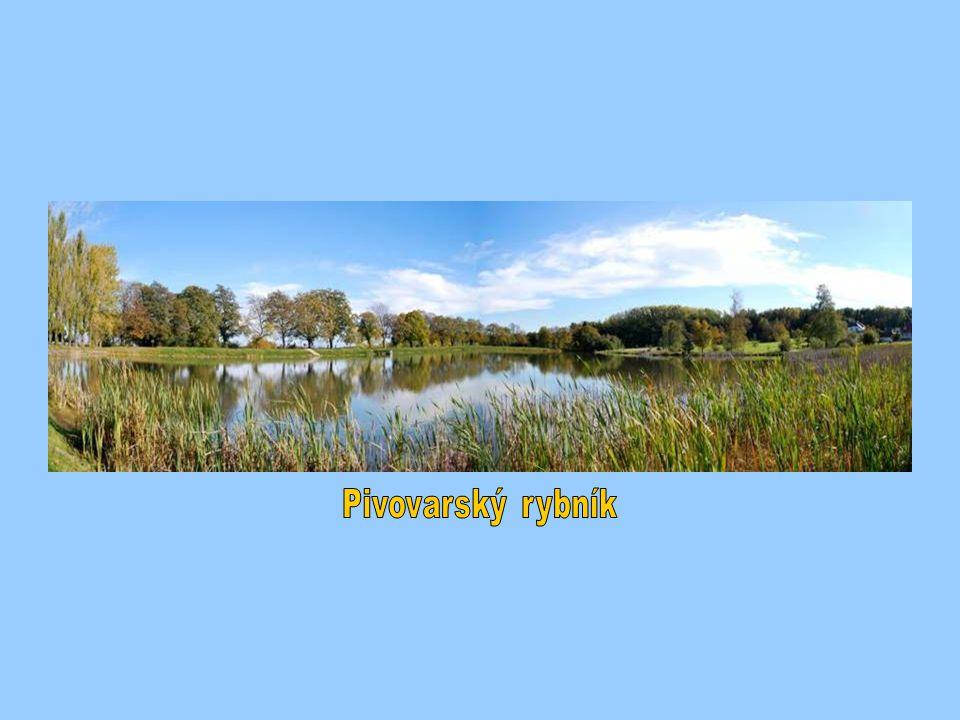 Pivovarský rybník