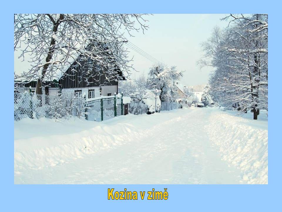 Kozina v zimě