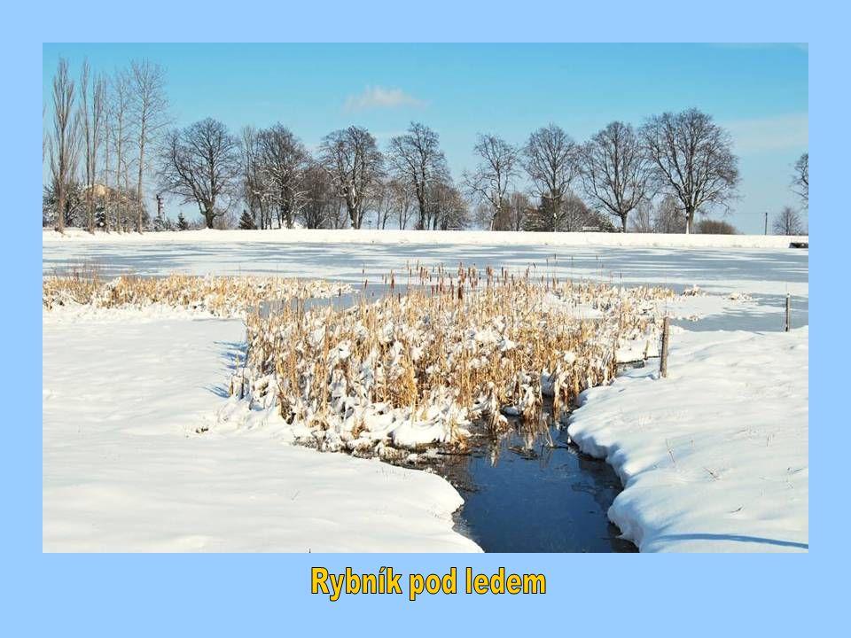 Rybník pod ledem