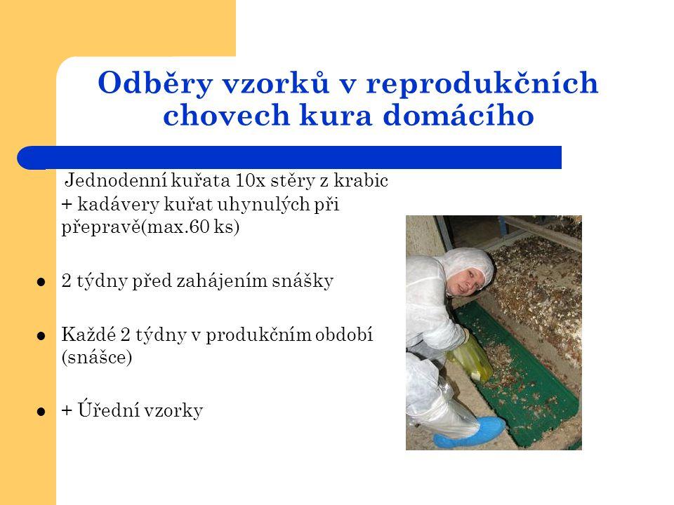 Odběry vzorků v reprodukčních chovech kura domácího