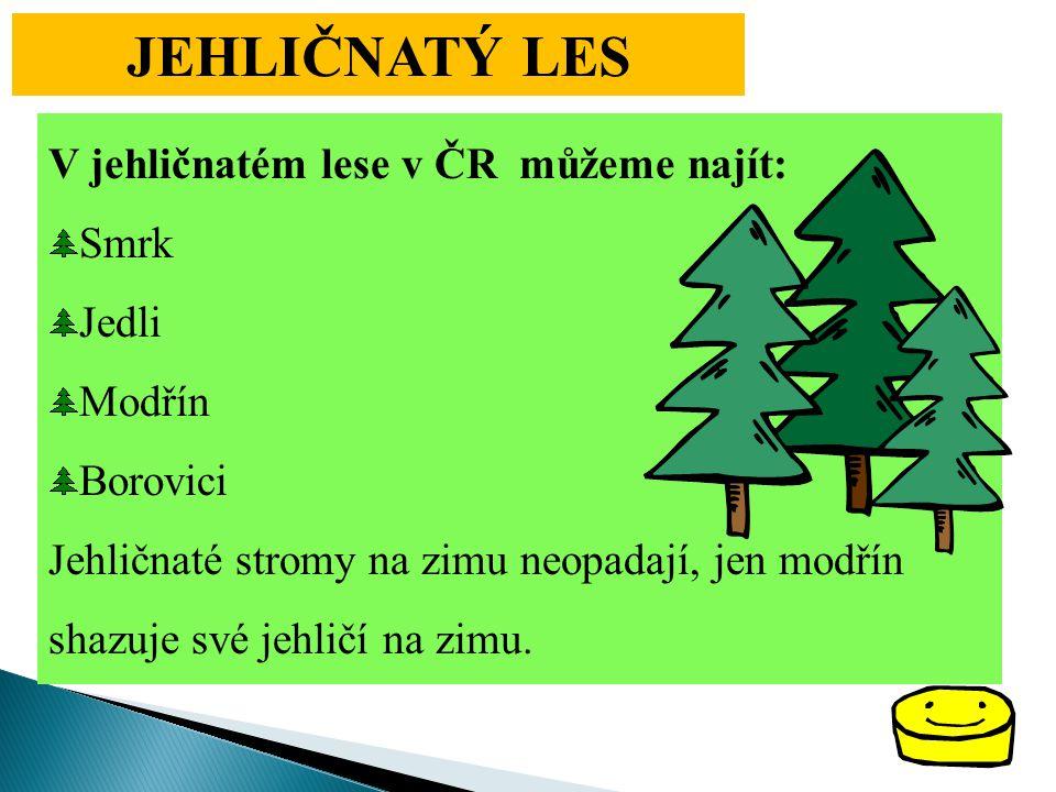 JEHLIČNATÝ LES V jehličnatém lese v ČR můžeme najít: Smrk Jedli Modřín
