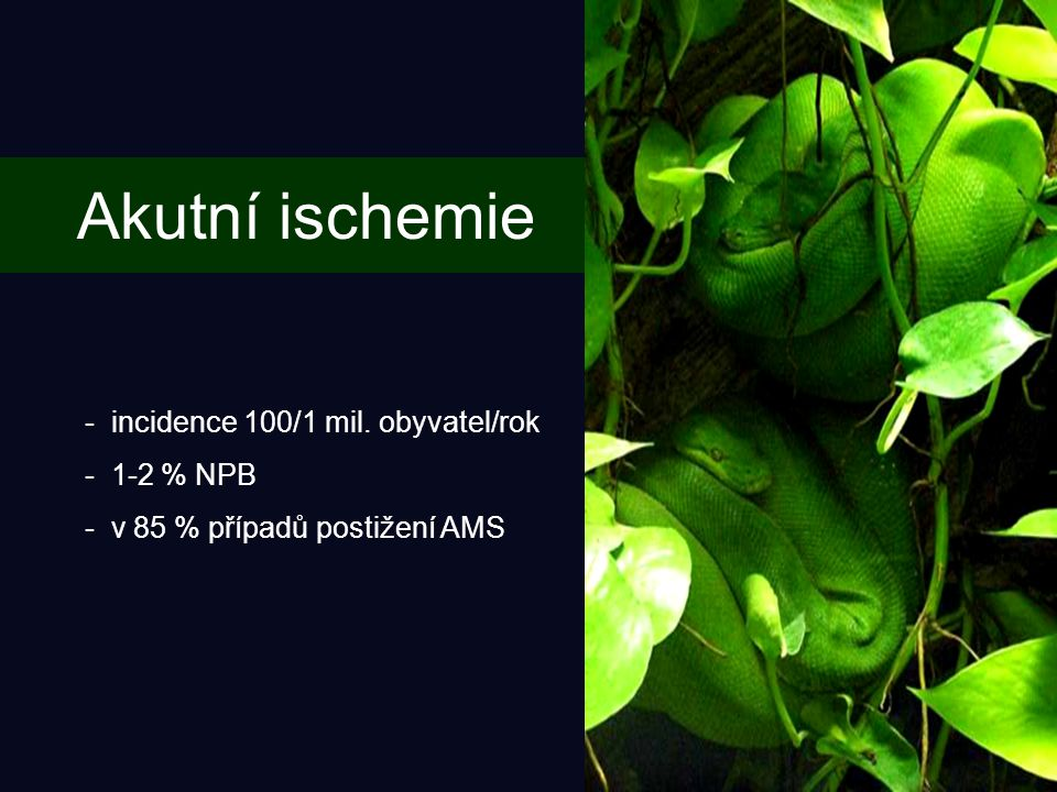 Akutní ischemie incidence 100/1 mil. obyvatel/rok 1-2 % NPB