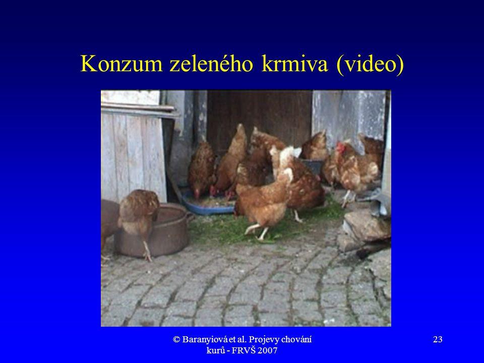 Konzum zeleného krmiva (video)