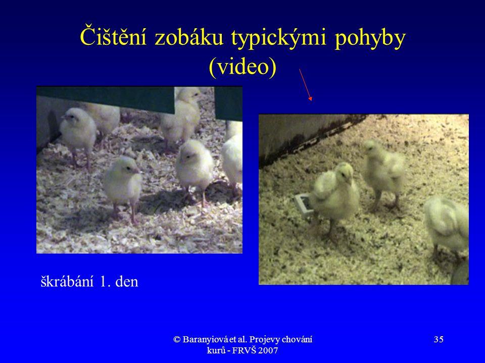 Čištění zobáku typickými pohyby (video)
