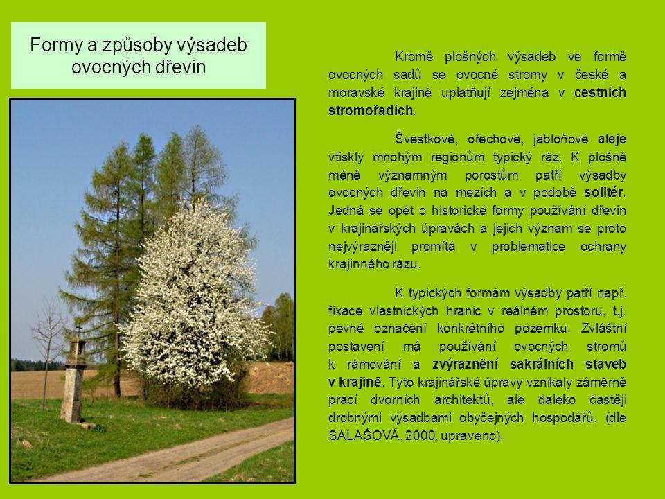 Formy a způsoby výsadeb ovocných dřevin