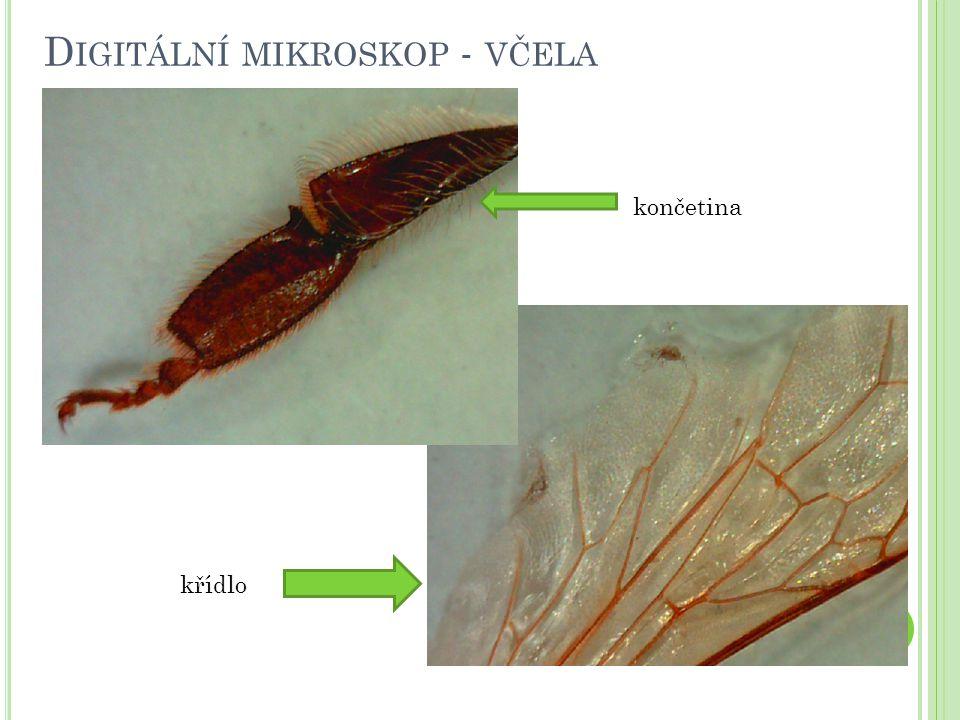 Digitální mikroskop - včela