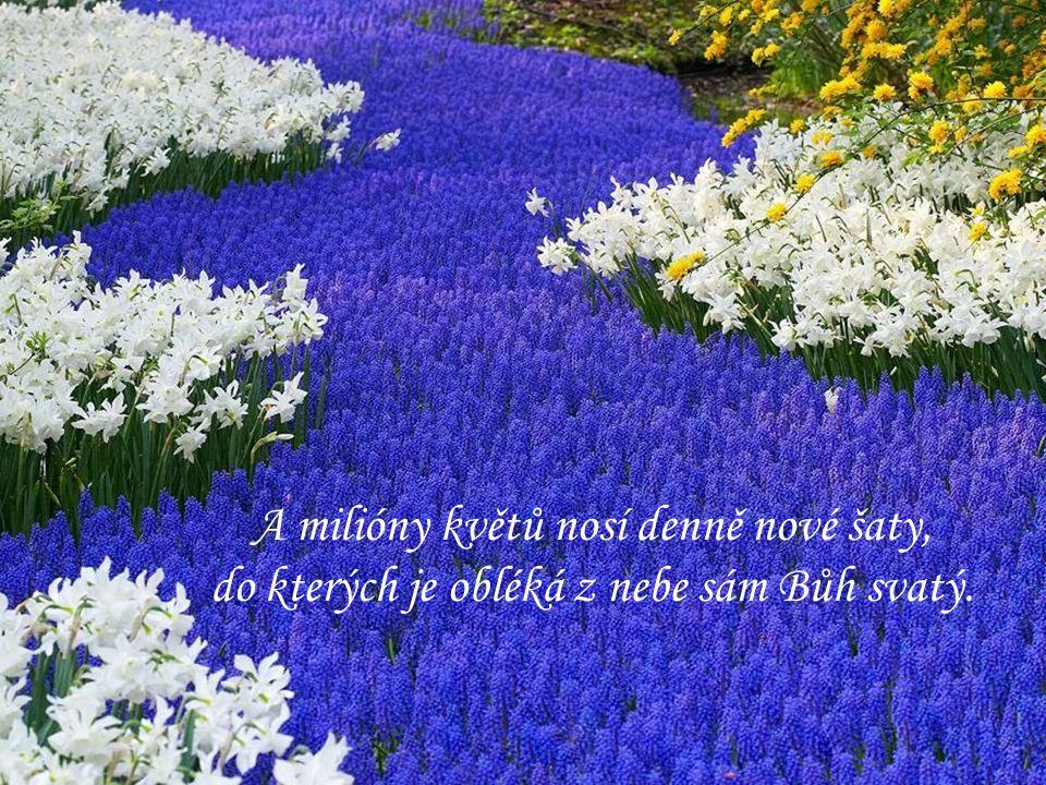 A milióny květů nosí denně nové šaty,