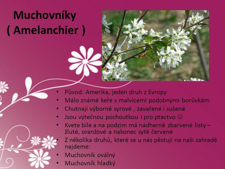 Muchovníky ( Amelanchier )
