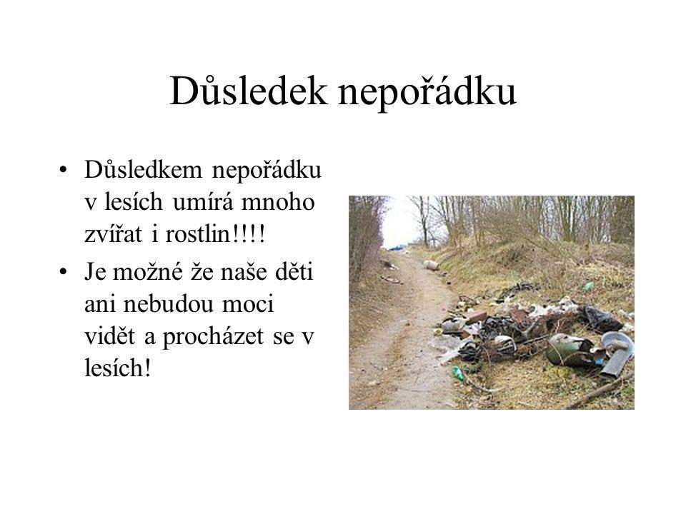 Důsledek nepořádku Důsledkem nepořádku v lesích umírá mnoho zvířat i rostlin!!!!