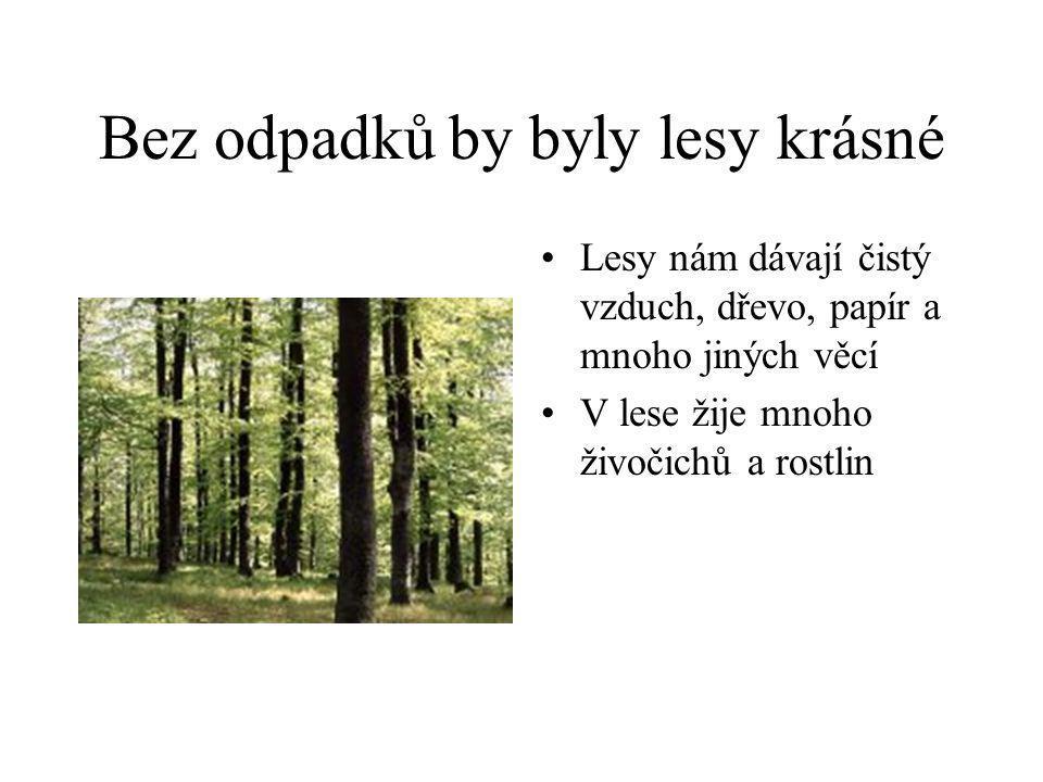 Bez odpadků by byly lesy krásné