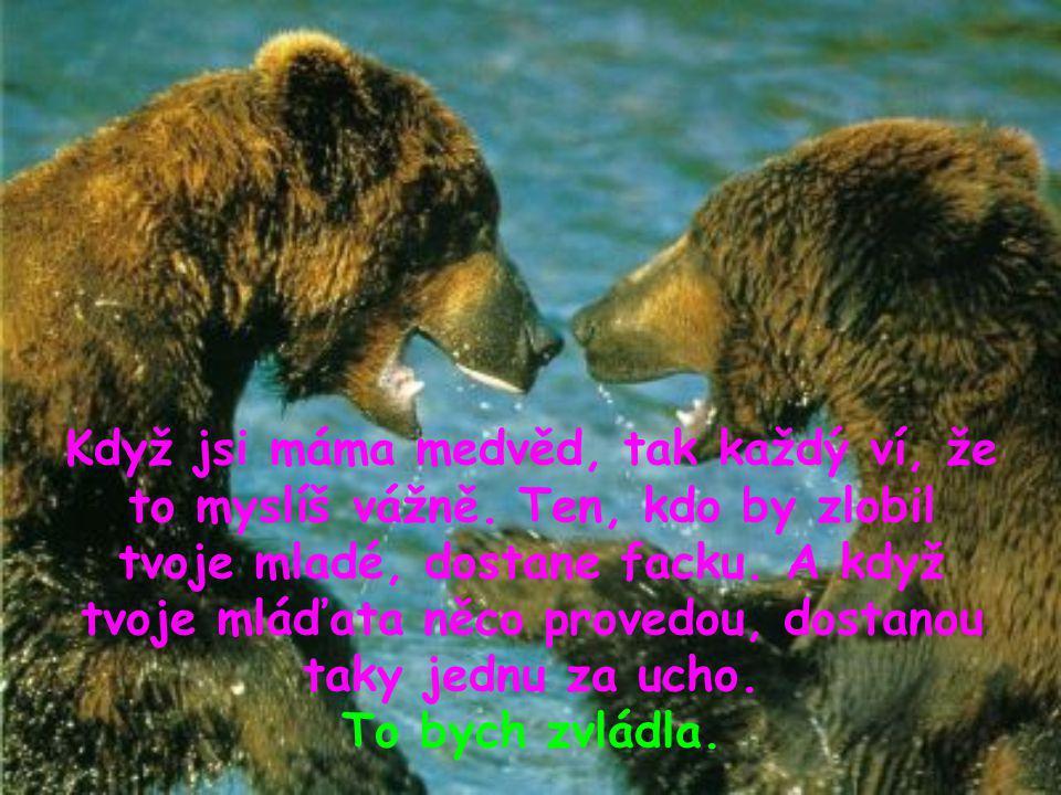 Když jsi máma medvěd, tak každý ví, že to myslíš vážně