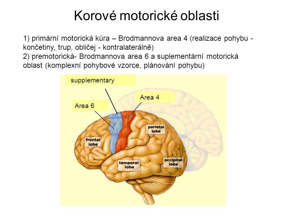 Korové motorické oblasti