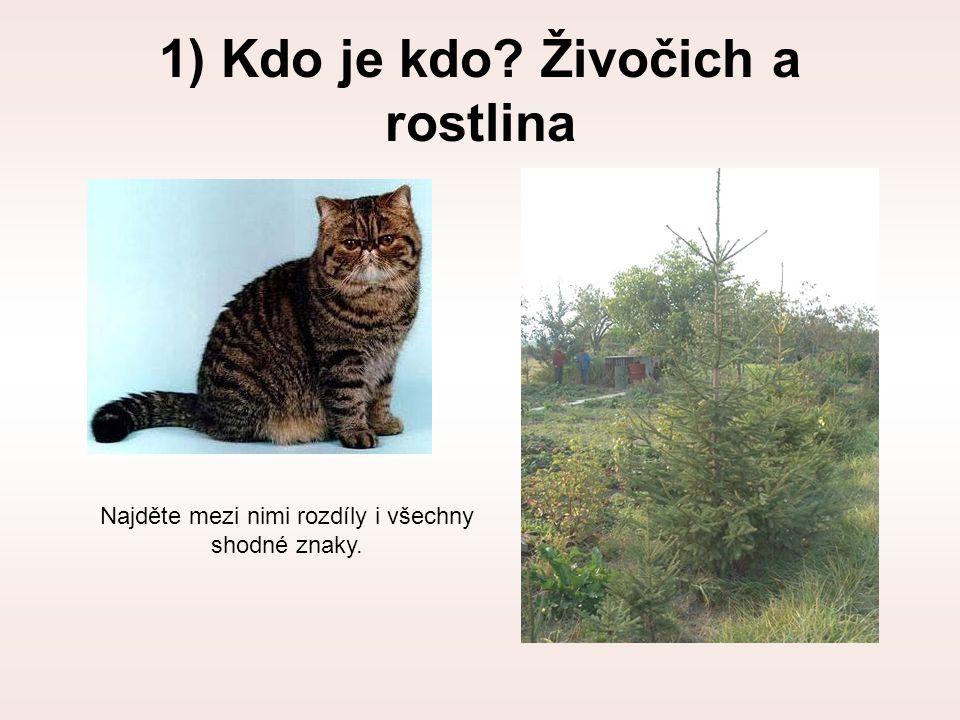 1) Kdo je kdo Živočich a rostlina