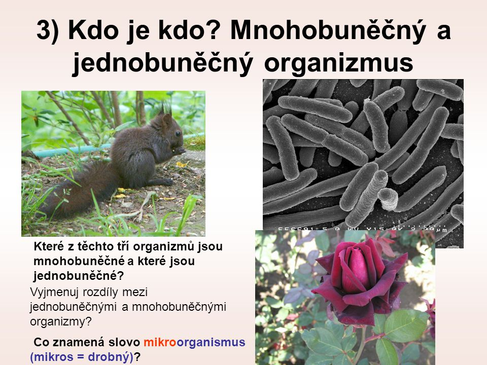 3) Kdo je kdo Mnohobuněčný a jednobuněčný organizmus