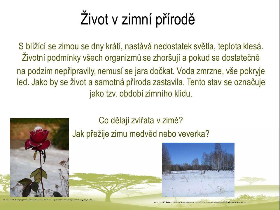Život v zimní přírodě
