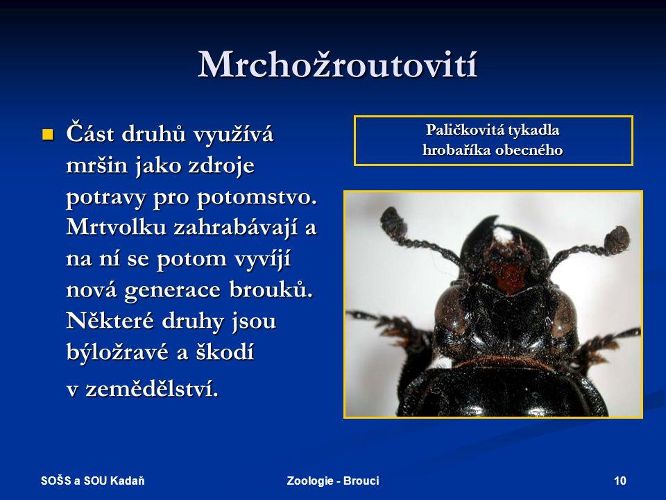 Mrchožroutovití