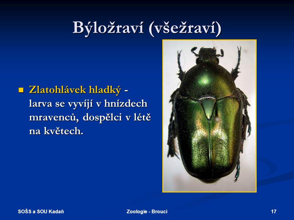Býložraví (všežraví) Zlatohlávek hladký - larva se vyvíjí v hnízdech mravenců, dospělci v létě na květech.