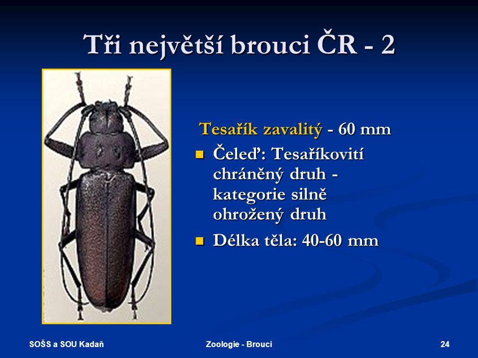 Tři největší brouci ČR - 2