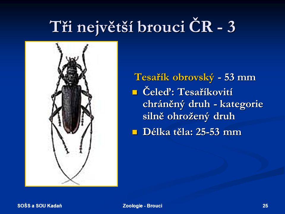 Tři největší brouci ČR - 3