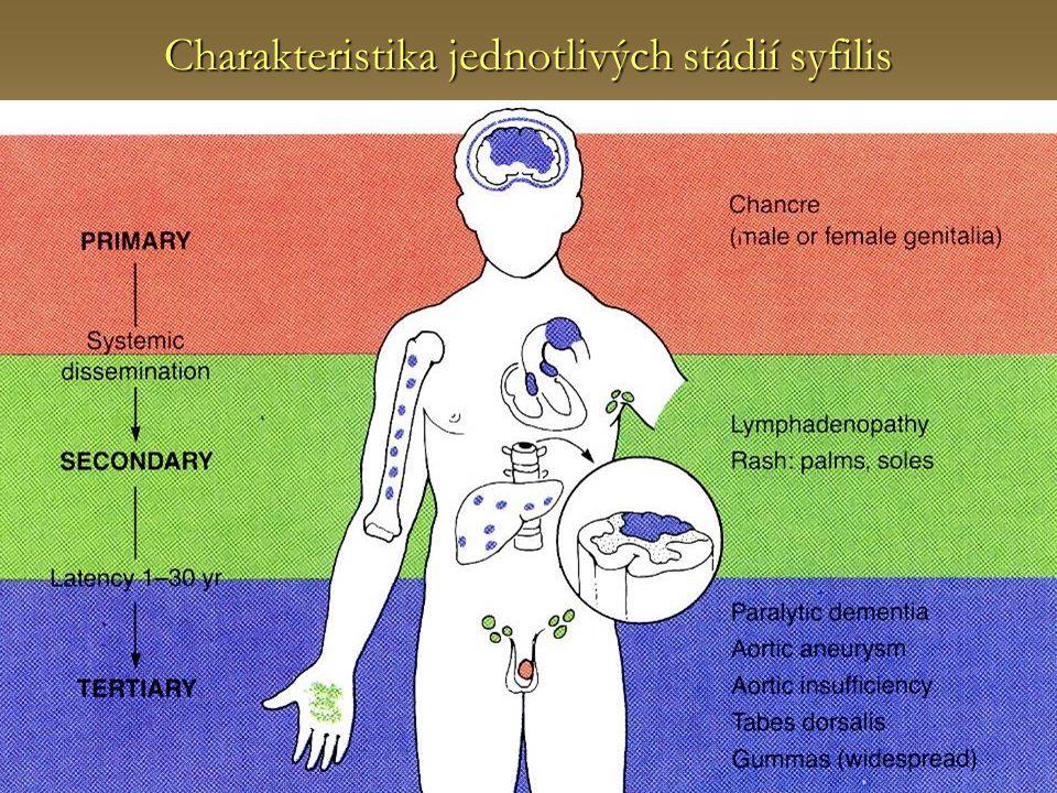 Charakteristika jednotlivých stádií syfilis