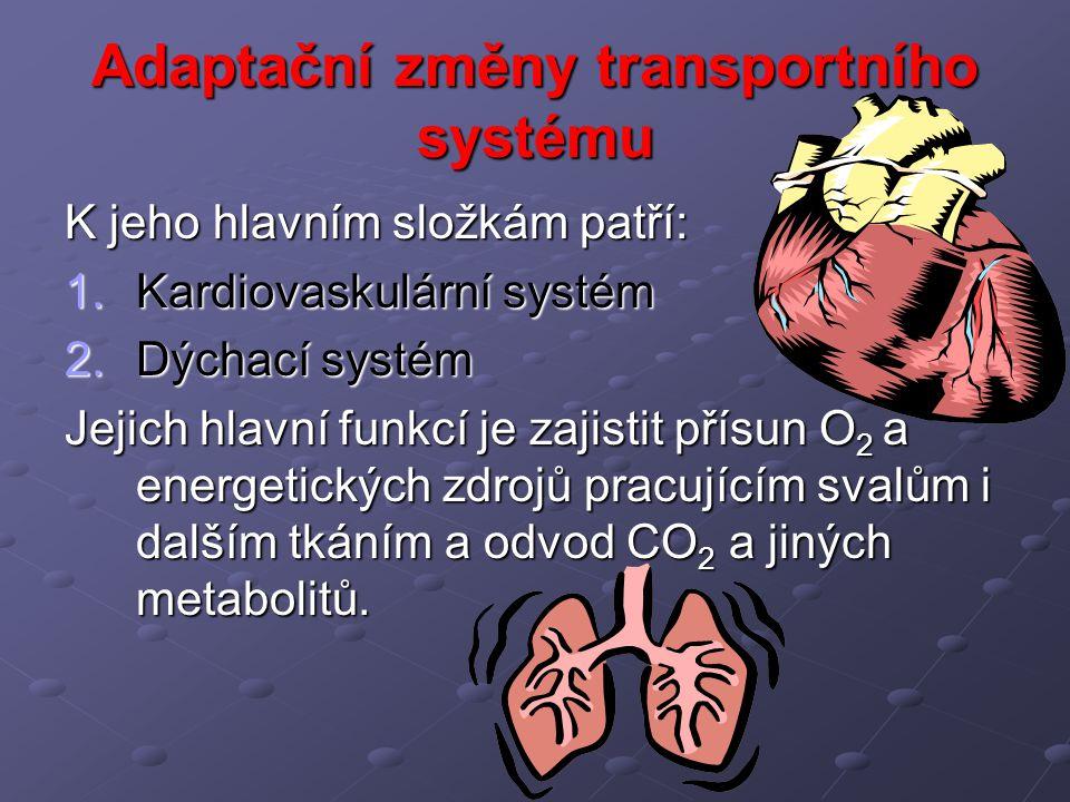 Adaptační změny transportního systému