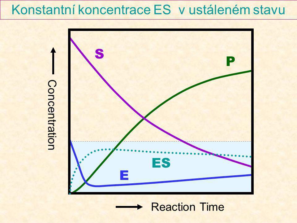 Konstantní koncentrace ES v ustáleném stavu