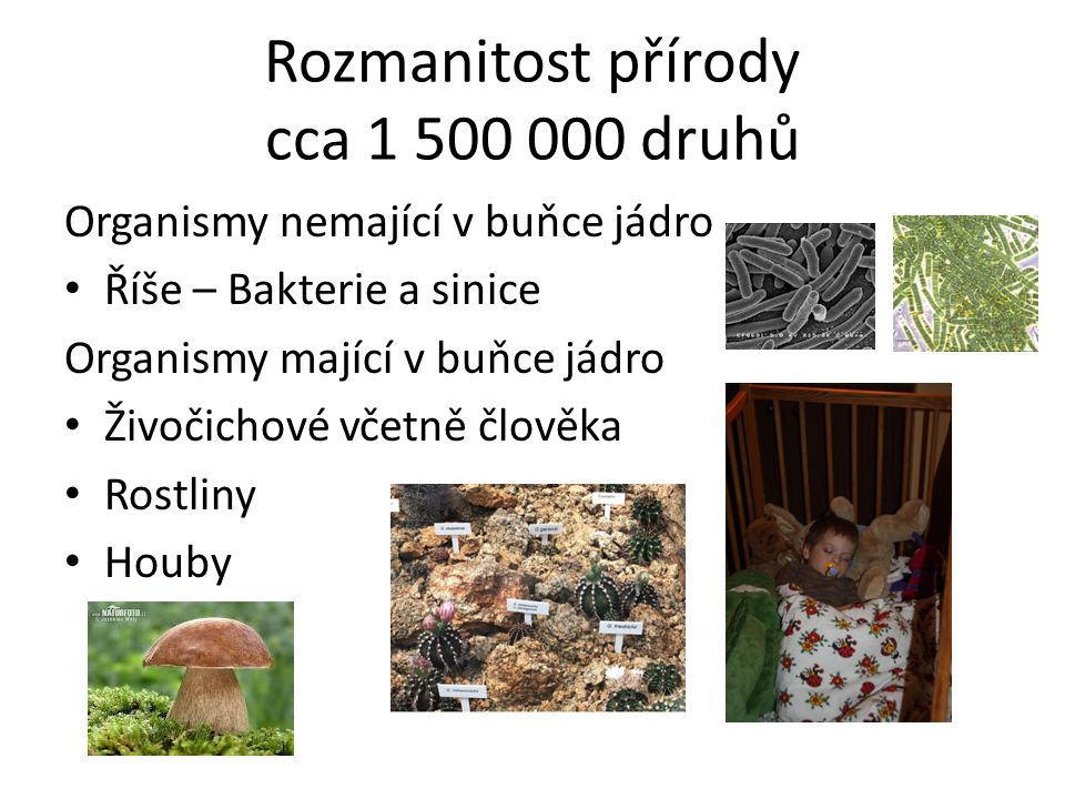 Rozmanitost přírody cca 1 500 000 druhů