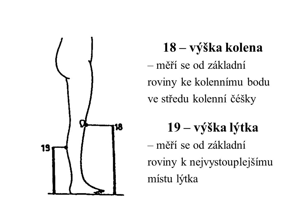 18 – výška kolena 19 – výška lýtka – měří se od základní