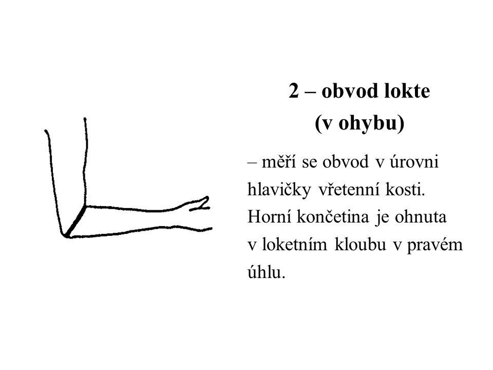 2 – obvod lokte (v ohybu) – měří se obvod v úrovni