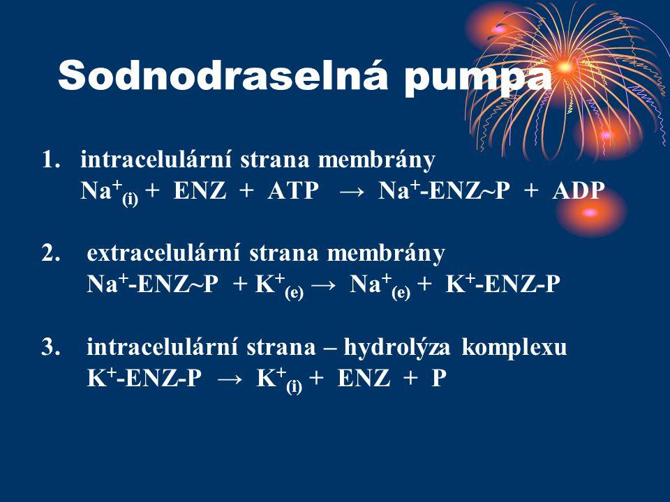 Sodnodraselná pumpa 1. intracelulární strana membrány