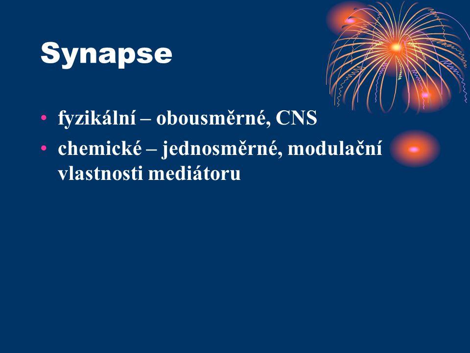 Synapse fyzikální – obousměrné, CNS