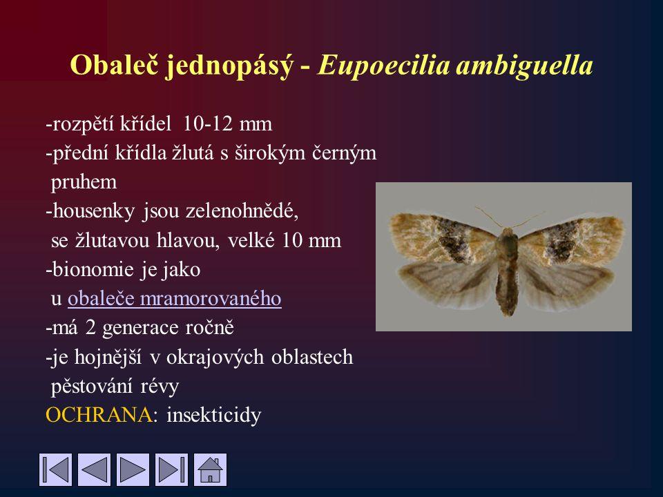 Obaleč jednopásý - Eupoecilia ambiguella