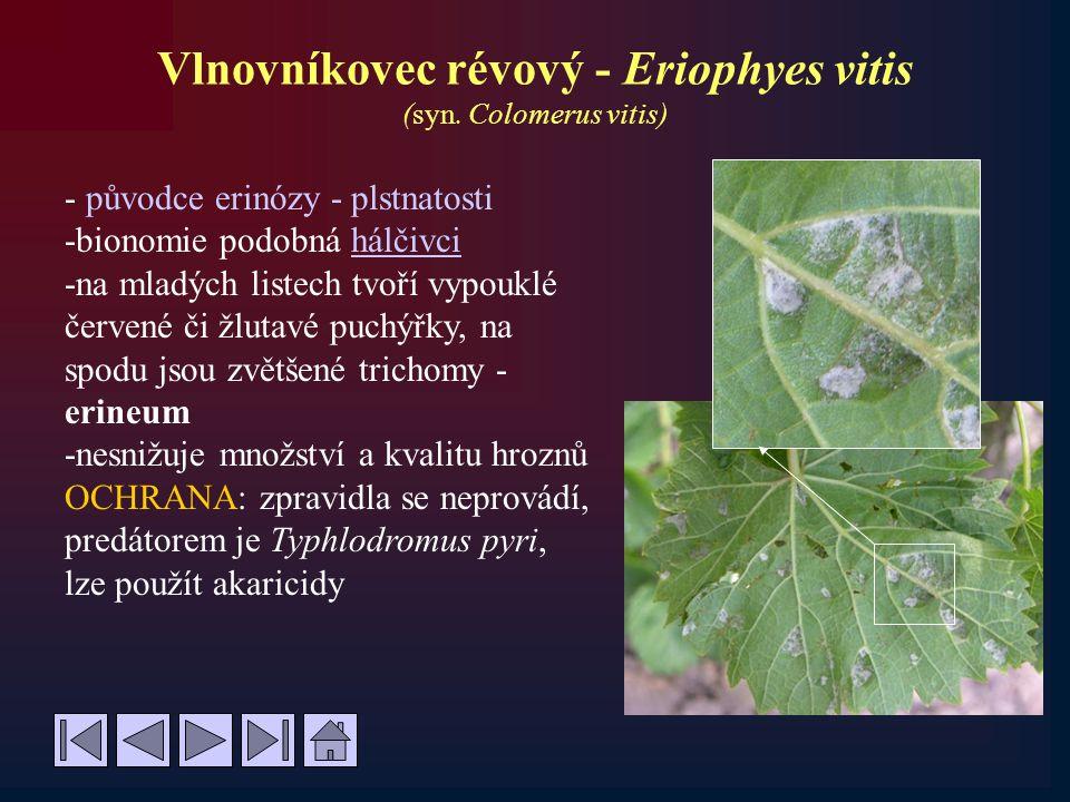 Vlnovníkovec révový - Eriophyes vitis (syn. Colomerus vitis)