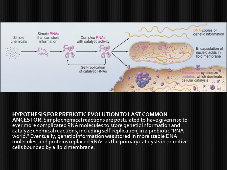 HYPOTHESIS FOR PREBIOTIC EVOLUTION TO LAST COMMON ANCESTOR