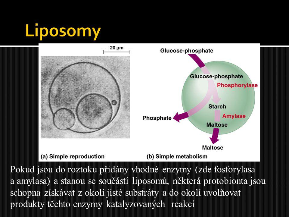 Liposomy Pokud jsou do roztoku přidány vhodné enzymy (zde fosforylasa