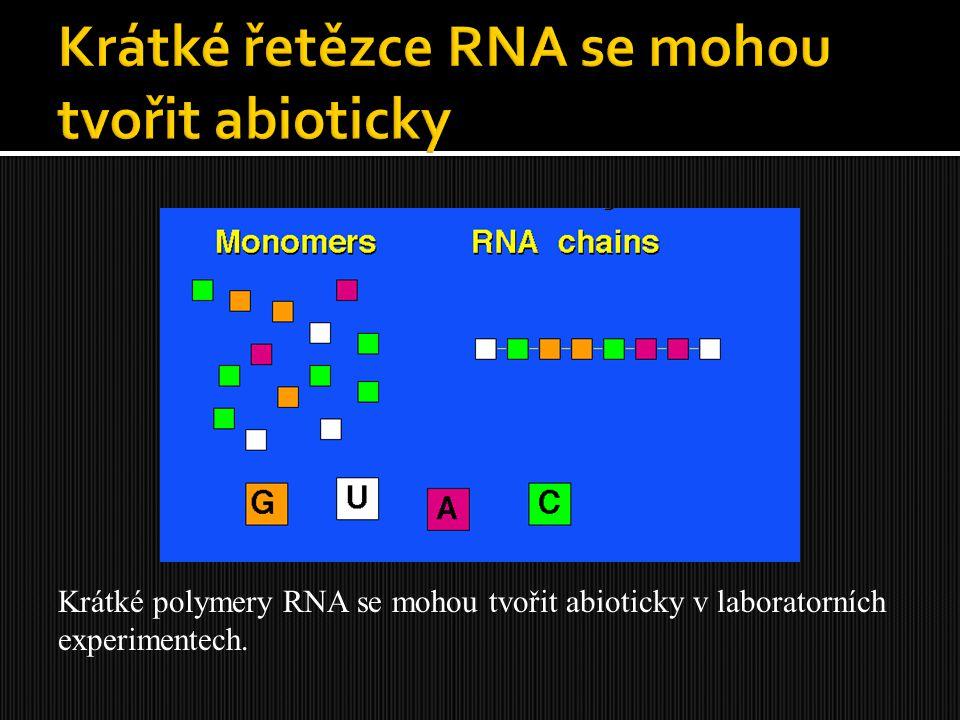 Krátké řetězce RNA se mohou tvořit abioticky