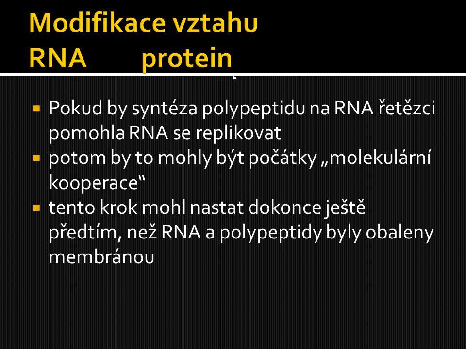 Modifikace vztahu RNA protein