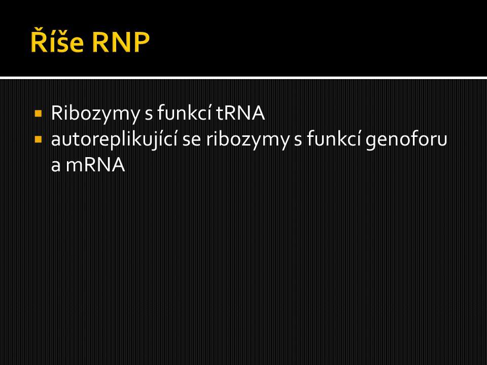 Říše RNP Ribozymy s funkcí tRNA