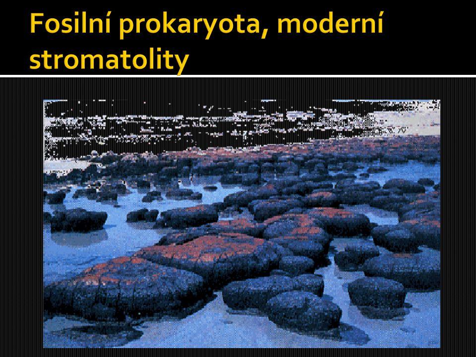 Fosilní prokaryota, moderní stromatolity